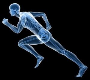 apparato|locomotore|del corpo umano|Personal Trainer Taranto|Lanza Personal Trainer