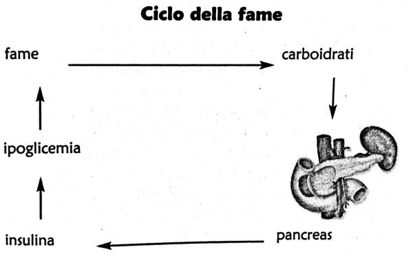 Ciclo della Fame|Dieta|Zona|Lanza Personal Trainer|Lanza Personal Trainer